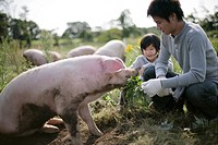 Pigs and a family in the farm