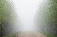 Misty rural road, Manitoba, Canada