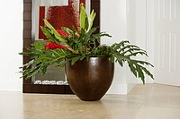 Close-up of a houseplant in front of a mirror