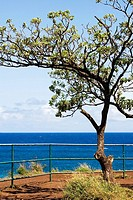 Tree on the beach, Hookipa Beach, Maui, Hawaii Islands, USA