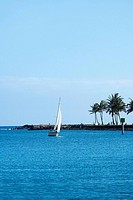 Sailboat in the sea, Honolulu, Oahu, Hawaii Islands, USA