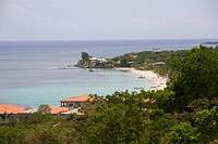 High angle view of trees on the beach, West Bay Beach, Roatan, Bay Islands, Honduras