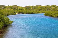River passing through a forest, Dixon Cove, Roatan, Bay Islands, Honduras