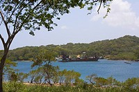 Trees at the riverside, Dixon Cove, Roatan, Bay Islands, Honduras