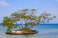 Trees surrounded by water, Las Palmas Resort, Roatan, Bay Islands, Honduras
