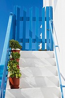 Potted plants on a staircase, Mykonos, Cyclades Islands, Greece