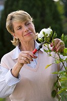Mature woman pruning bush, close-up