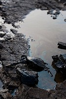12-07-2007, crude oil from wrecked 146 000 ton trank, hebei spirit, south korea, korea, country, Chungcheongnam-Do, tae-an, tae-an gun, tae-an peninsu...