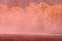 Sunset in fog with autumn trees and pasture along. Coeur d'Alene River. Idaho. USA