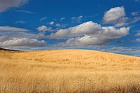 Clouds over prairie grass in the Palouse hills of Eastern Washington. USA