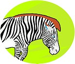 Illustration of a zebra (thumbnail)