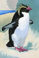 An ilustration of a rock hopper (thumbnail)
