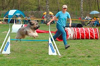 agility : dog jumping over hurdle