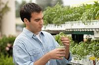 Hispanic man working in plant nursery