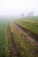 Track, trees, fog, Morgenddämmerung, season, autumn, autumnal, foggily, cloudy, hazy, fields, way, meadows, deserted, outside, immensely, leaves, sile...
