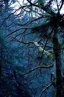 Tree, perished, Vorarlberg, Dornbirn, centime-hole-canyon, Austria,