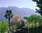 Switzerland, Tessin, Locarno Brione, Lago Maggiore, view, destination, lake,Langensee, mountains, trees, palm, prime, spring, sunny, little houses, st...