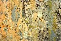 Boulder with Lichen