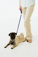 Dog on leash next to woman