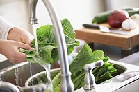 Woman washing green leaf lettuce