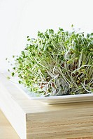 Alfalfa sprouts on plate