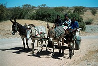 Family, with, donkey, cart, Damaraland, Namibia, , Domestic, Donkey,