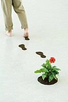 Man leaving footprints of soil as he walks by flower, cropped view