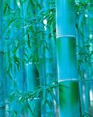 Close-up Of Bamboo,Korea
