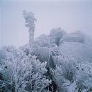 Mt  Taebaeksan Provincial Park,Gangwon,Korea