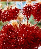 Chile Peppers Santa Fe United States Food