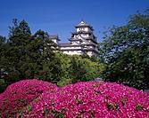 Azalea, Himeji Castle, Himeji, Hyogo, Japan