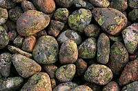 Close_up view of mossy pebbles