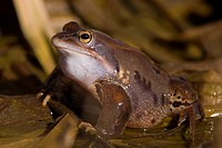 Close_up view of a frog