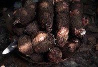 Assorted sweet potatoes in a closeup shot