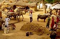Village scene in India.