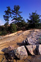 Granite Bedrock of the Canadian Shield and Pine Trees, Whitefish Falls, North of Manitoulin Island, Georgian Bay, Lake Huron, Ontario, Canada