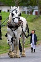 Work horse and amish girl near Berlin, Ohio.