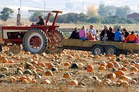 A tractor takes people through a pumpkin patch in Fruitland, Idaho.