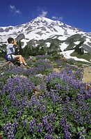 USA, Mount Rainier National Park, hiker in alpine area with wild flowers