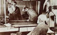 Pavlov observing one of the dogs on which he conducted his behavorist experiments. Ivan Petrovich Pavlov 1849_1936 was a Russian physiologist and expe...