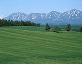Mt. Tokachidake Wheat field Biei Hokkaido Japan Tree Mountain Prairie