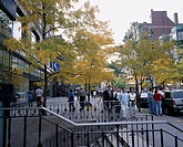 Newbery Street Red leaves Boston Massachusetts State United States of America Building City View Passage Stairs People Red leaves Tree Car Vehicle, Tr...