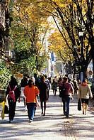 Autumn Omotesando Shibuya Tokyo Japan Tree People Passage City View