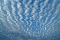 Cirrocumulus, low angle view, full frame
