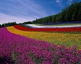 Flower garden Farm Tomita Nakafurano Furano Hokkaido Japan Blue sky Flower Plant Tree Green lavender