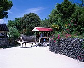 Water buffalo car, Taketomijima, Taketomi island, Okinawa, Japan