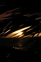 Palm leaf silhouette against sunset over ocean in Maui, Hawaii, USA