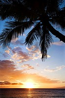 Sunset sky framed by palm tree over the Pacific Ocean in Kihei, Maui, Hawaii, USA