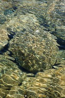 Rocks seen through clear, rippled water with dappled sunlight in Maui, Hawaii