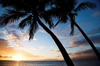 Sunset sky framed by palm trees over the Pacific Ocean in Kihei, Maui, Hawaii, USA